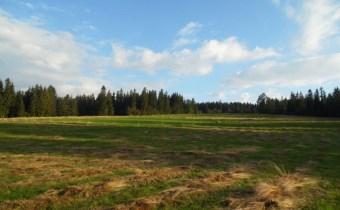 działka rolna leśna w dziniszu gm. Kościelisko